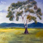 Candlebark in the Yarra Valley