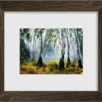 Red gum forest