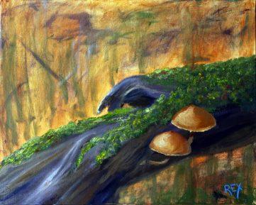 Mycena toadstools on a log, Sherbrooke Forest