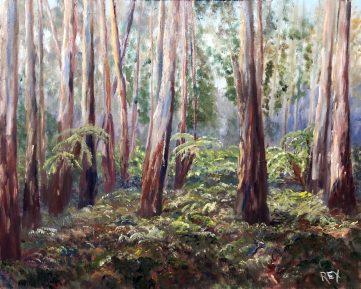 Sherbrooke Forest scene
