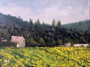 Sunflower fields near Grignan